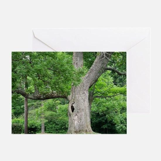 Hollow Oak Tree on Western Campus Greeting Card