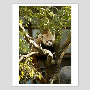 Red Panda 2 Small Poster