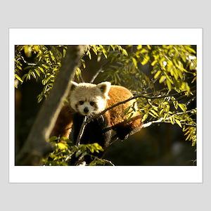 Red Panda 1 Small Poster