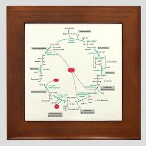 Kreb's Cycle Framed Tile