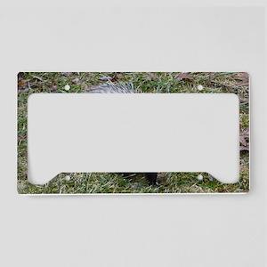 Poss12.125x6.125 License Plate Holder