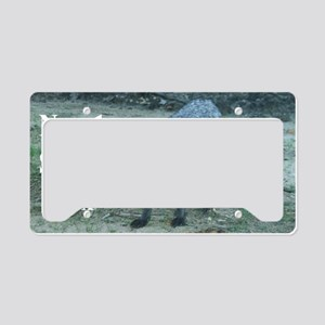Fox12.125x6.125A License Plate Holder