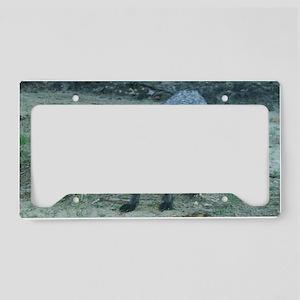 Fox12.125x6.125C License Plate Holder
