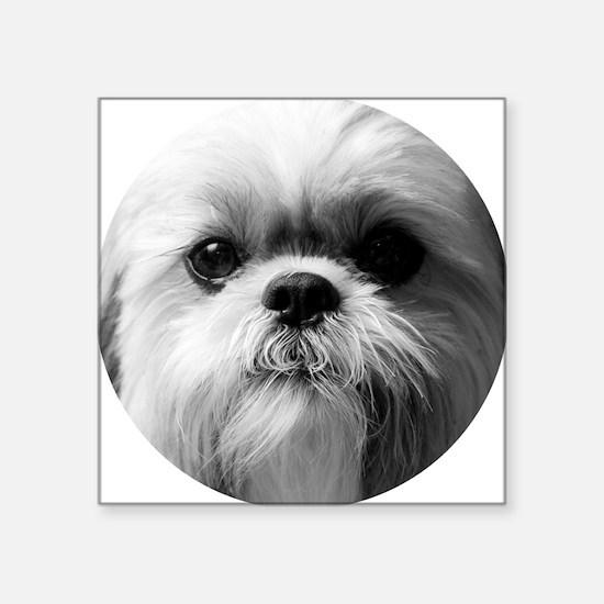 "Shih Tzu Photo Square Sticker 3"" x 3"""