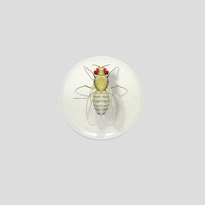 Drosophila Mini Button