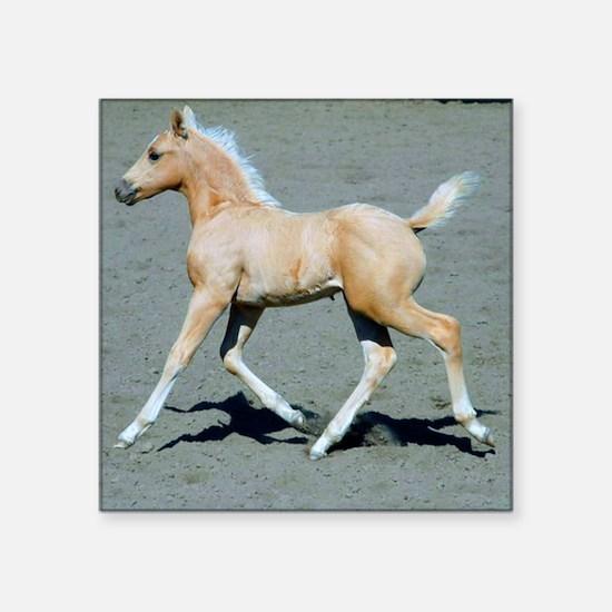 "Palomino Foal Square Sticker 3"" x 3"""