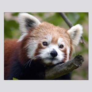 Red Chinese Panda Small Poster