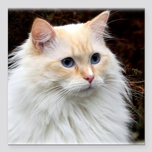 "Ragdoll Cat 9Y448D-019 Square Car Magnet 3"" x 3"""