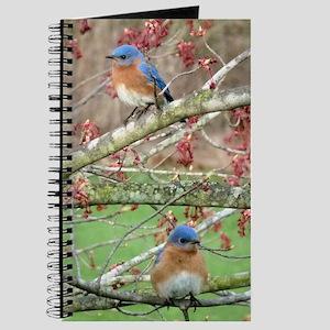 BB4.25x5.5SF Journal
