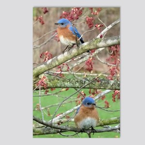 BB4.25x5.5SF Postcards (Package of 8)