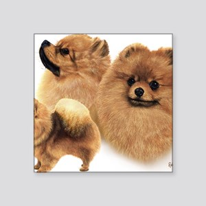 "Pomeranian Multi Square Sticker 3"" x 3"""