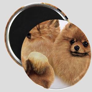 Pomeranian Multi Magnet
