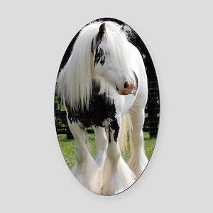 Gypsy Horse Stallion Oval Car Magnet