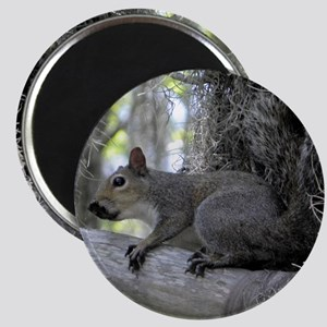 Alabama Squirrel CC Magnet