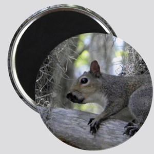 Alabama Squirrel oo Magnet