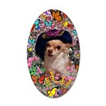 Chi Chi Chihuahua 35x21 Oval Wall Decal