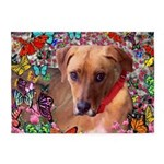 Trista Rescue Dog Butterflies 5'x7'Area Rug