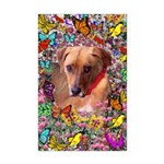 Trista Rescue Dog Butterflies Mini Poster Print