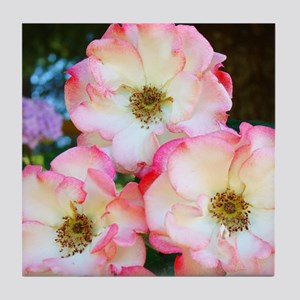 A Rose Pink 17M Roses Rose Garden whi Tile Coaster