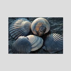 Sea Shells Rectangle Magnet