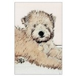 Wheaten Terrier Puppy Large Poster