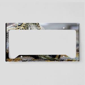 turtleclose License Plate Holder