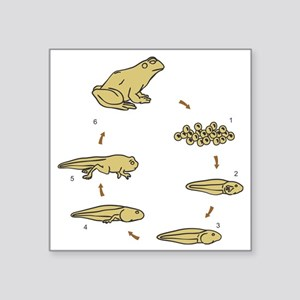 """t-shirt_frogLifeCycle Square Sticker 3"""" x 3"""""""
