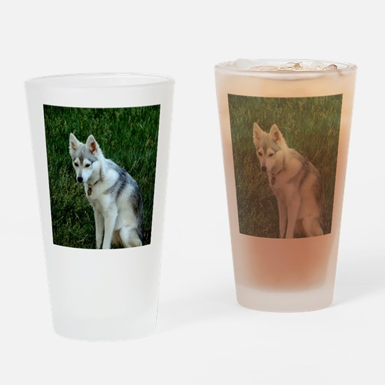 Alaskan Klee Kai sitting on green g Drinking Glass