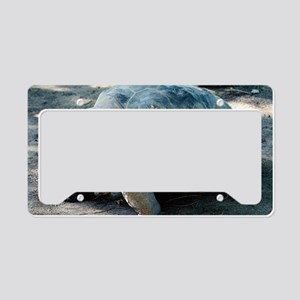 Portrait of a Galapagos Torto License Plate Holder