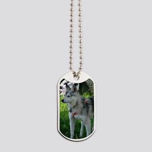 Alaskan Klee Kai looking into the distanc Dog Tags
