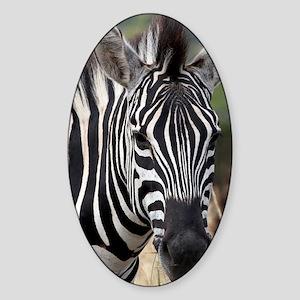 single zebra Sticker (Oval)