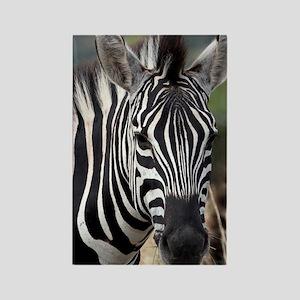 single zebra Rectangle Magnet