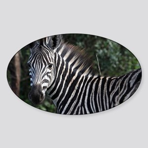 young zebra note Sticker (Oval)