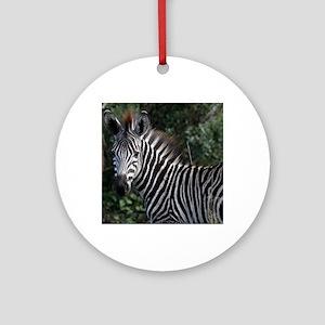young zebra note Round Ornament