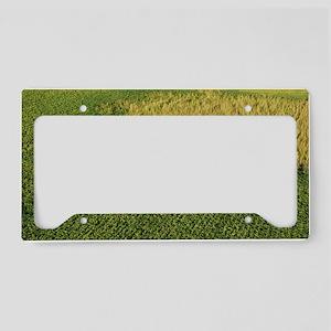 DSC_0293_edit License Plate Holder
