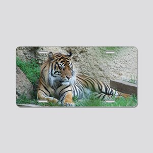 Sleeping Tiger Aluminum License Plate