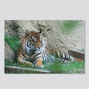 Sleeping Tiger Postcards (Package of 8)