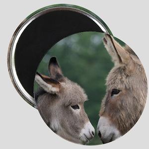 Donkey clock Magnet
