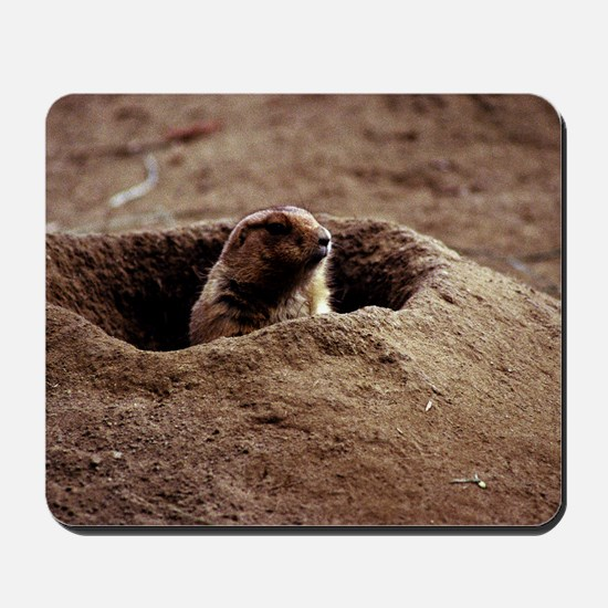 A Black-Tailed Prairie Dog puking his he Mousepad