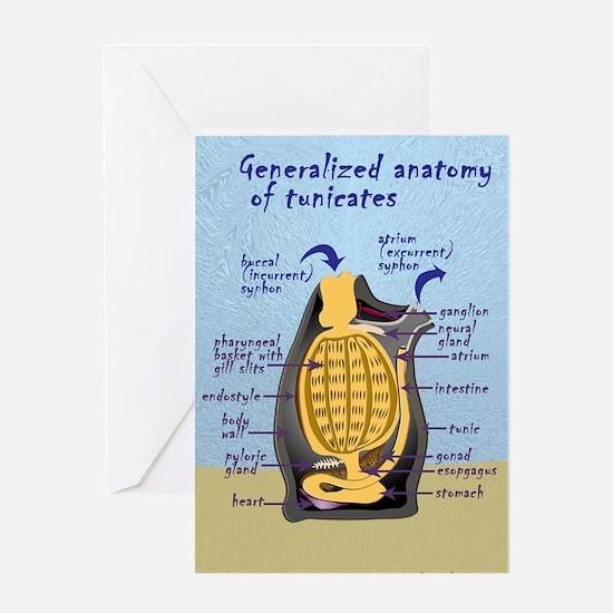 Tunicate Greeting Card