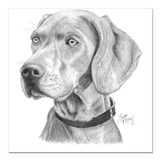 Weimaraner Square Car Magnets