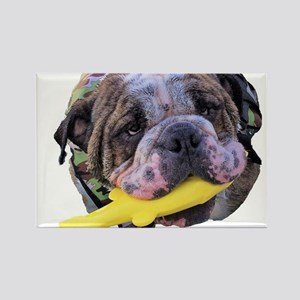 Bulldog with toy fish in mouth Magnets