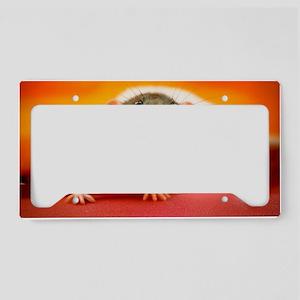 DSC_0042 License Plate Holder