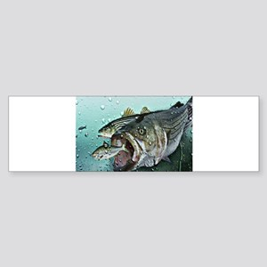 striper n shad Bumper Sticker