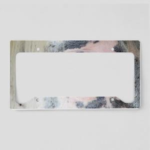 6-20-11-2  License Plate Holder