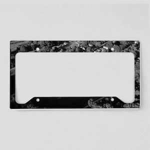 DSC_0206_editbw License Plate Holder