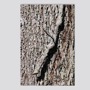 Tree Bark Postcards (Package of 8)