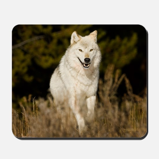 white wolf 10by Mousepad