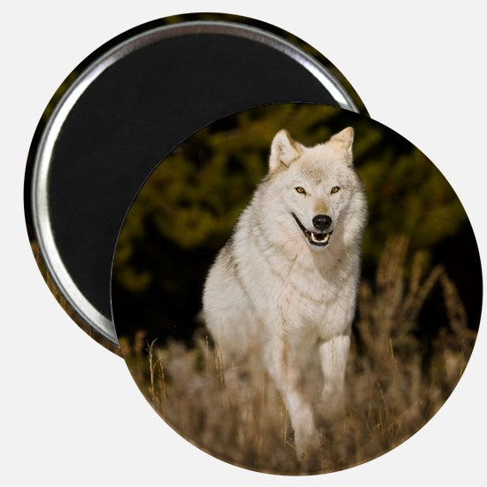 white wolf 10by Magnet
