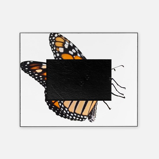 Monarch Butterfly Picture Frame